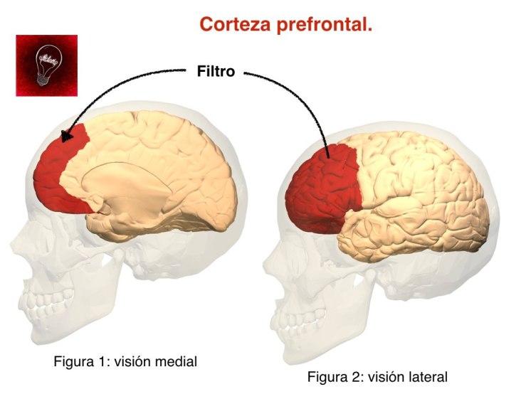 frontal-figura-001